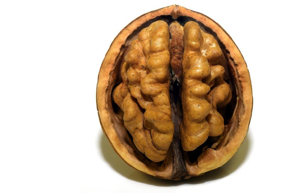 Дослідили позитивний вплив волоських горіхів на пам`ять
